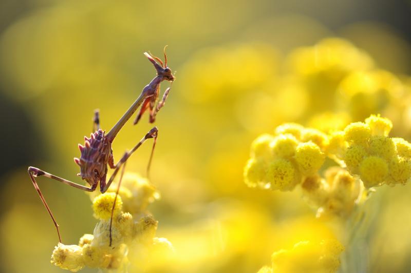 Amarillo en la naturaleza