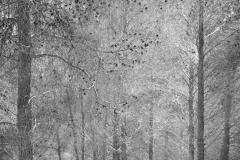 Composición con pinos