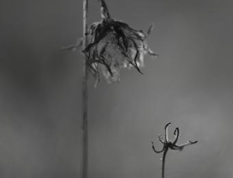 Toni Sanchis - Tema: Flores